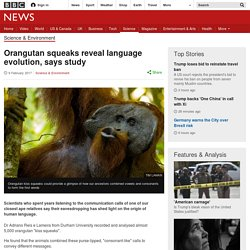 Orangutan squeaks reveal language evolution, says study