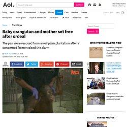 Baby orangutan and mother set free after ordeal