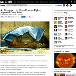 An Orangutan Has (Some) Human Rights, Argentine Court Rules
