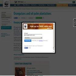 Orangutans and oil palm plantations