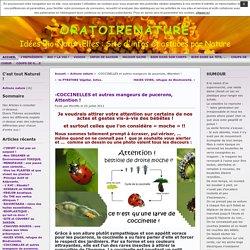 ORATOIRENATURE » Archives du Blog » -COCCINELLES et autres mangeurs de pucerons, Attention !