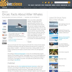 Orcas: Facts About Killer Whales