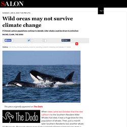Wild orcas may not survive climate change