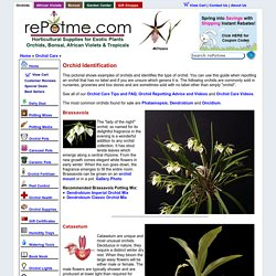 Orchid Identification
