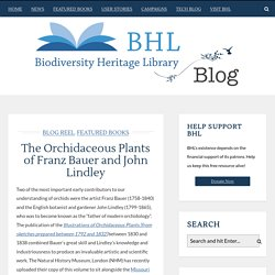 The Orchidaceous Plants of Franz Bauer and John Lindley