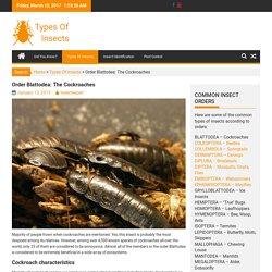 Order Blattodea: The Cockroaches
