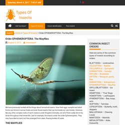 Order EPHEMEROPTERA: The Mayflies