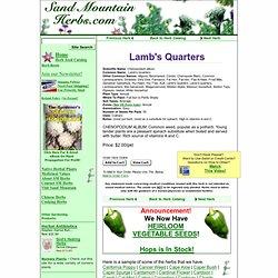 Order Lamb's Quarters, Chenopodium album, Herb Seeds