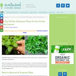 21 Out Of The Ordinary Ways To Use Fresh Mint Leaves