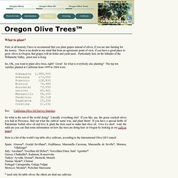 Oregon Olive Trees - Planting