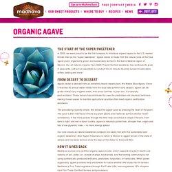 ORGANIC AGAVE - Madhava