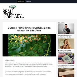 3 Organic Pain Killers As Powerful As Drugs, Without The Side Effects – REALfarmacy.com