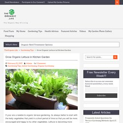 Grow Organic Lettuce in Kitchen Garden - TheOrganic.Life