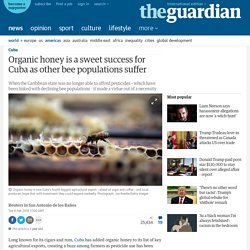 Organic honey is a sweet success for Cuba as other bee populations suffer