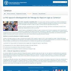 FAO 12/11/15 La FAO appuie le développement de l'élevage du tilapia en cage au Cameroun