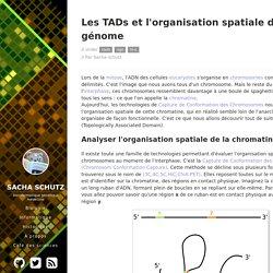 Les TADs et l'organisation spatiale du génome // Sacha Schutz // bioinformatique génétique médecine