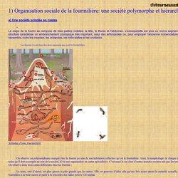 1) Organisation sociale de la fourmilière: une société polymorphe et hiérarchisée
