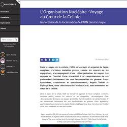 L'Organisation Nucléaire : Voyage au Cœur de la Cellule - Omniscience