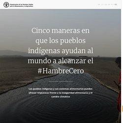 Cinco maneras en que los pueblos indígenas ayudan al mundo a alcanzar el #HambreCero