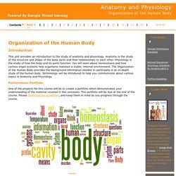 Organization of the Human Body