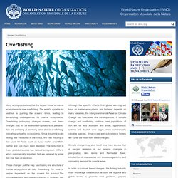WORLD NATURE ORGANIZATION – Overfishing