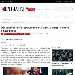 Mafia oriental deforesta impunemente Calakmul, la mayor reserva de bosque tropical