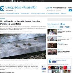 Un millier de ruches décimées dans les Pyrénées-Orientales