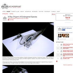 X-Ray Origami of Endangered Species
