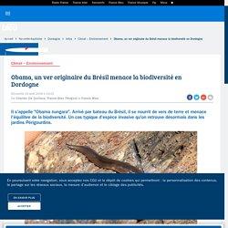 FRANCE BLEU 19/08/18 Obama, un ver originaire du Brésil menace la biodiversité en Dordogne