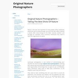 Original Nature Photographers – Taking The Best Shots Of Nature - Original Nature Photographers