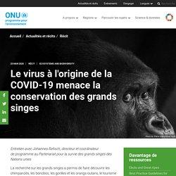 Le virus à l'origine de la COVID-19 menace la conservation des grands singes