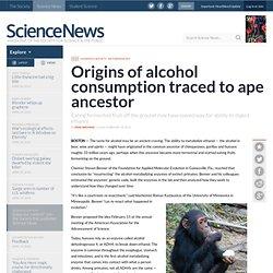 Origins of alcohol consumption traced to ape ancestor