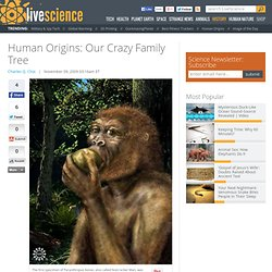 Human Origins: Our Crazy Family Tree