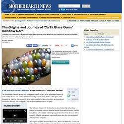 The Origins and Journey of ' Carl' s Glass Gems' Rainbow Corn - Sustainable Farming