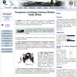 TAAM - CNRS Orléans UPS 44 - Transgénèse et Archivage d'Animaux Modèles