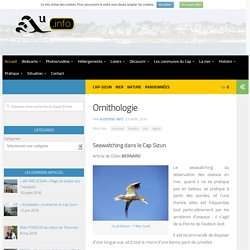 Ornithologie - AUDIERNE INFO