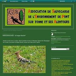 ORNITHOLOGIE - la huppe fasciée* - Le blog de asepa environnement