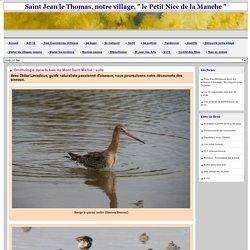 Ornithologie dans la baie du Mont Saint Michel : suite