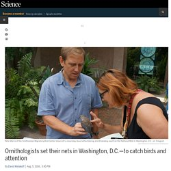 Ornithologists set their nets in Washington, D.C.—to catch birds and attention