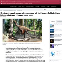 Ornithomimus dinosaur with preserved tail feathers and skin tightens linkages between dinosaurs and birds
