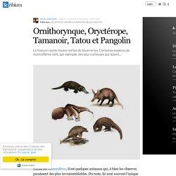 Ornithorynque, Oryctérope, Tamanoir, Tatou et Pangolin