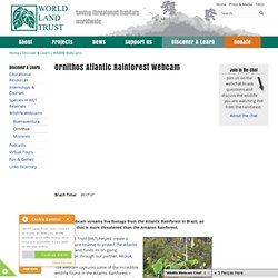 Ornithos Atlantic Rainforest Webcam