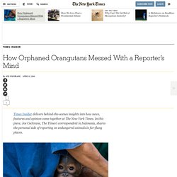 How Orphaned Orangutans Messed With a Reporter's Mind