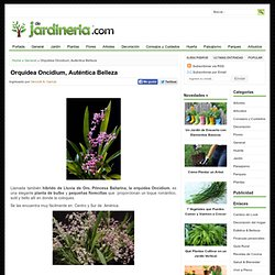 Orquídea Oncidium, Auténtica Belleza