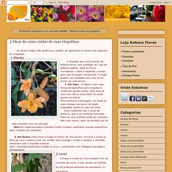 Dicas Arranjos Orquideas Rosas e Floricultura