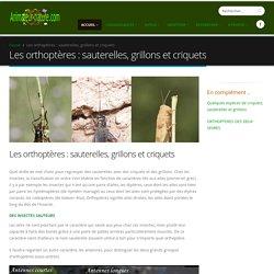 Les orthoptères : sauterelles, grillons et criquets