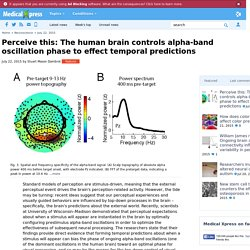 Perceive this: The human brain controls alpha-band oscillation phase to effect temporal predictions