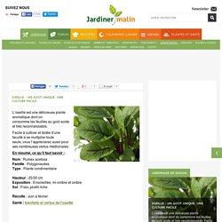 Oseille : semis, culture, entretien, recolte