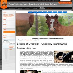 Ossabaw Island Swine — Breeds of Livestock, Department of Animal Science