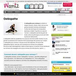 Ostéopathe : fiche métier pour devenir Ostéopathe